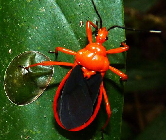 Walking sticks, true bugs, grasshoppers, cicadas