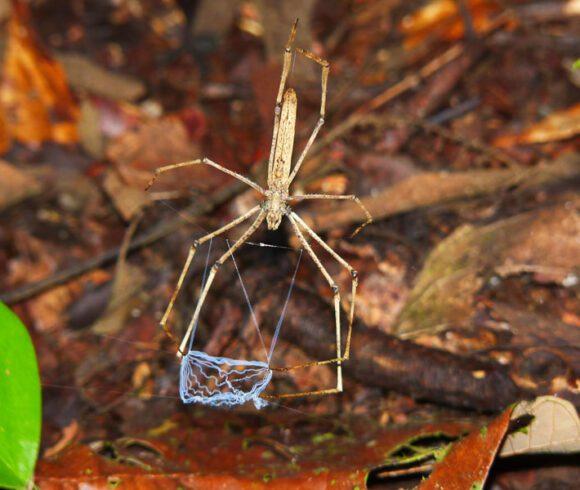 Bodenfauna, Myriapoden und Arachniden