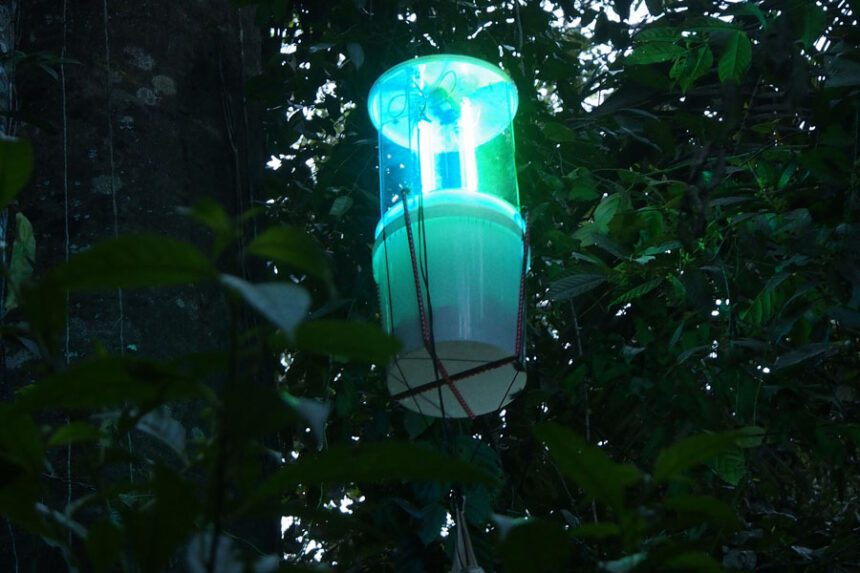 Tree traps (illuminated at night)