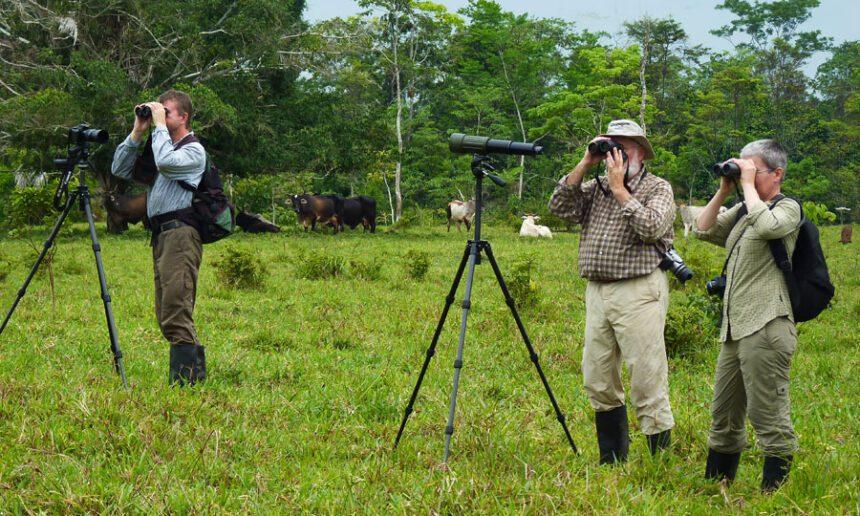 Vogelbeobachtung am Waldrand von Panguana