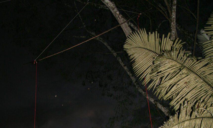 Baumkronennetz für den Fledermausfang in 15 m Höhe Fotos: A. Meschede