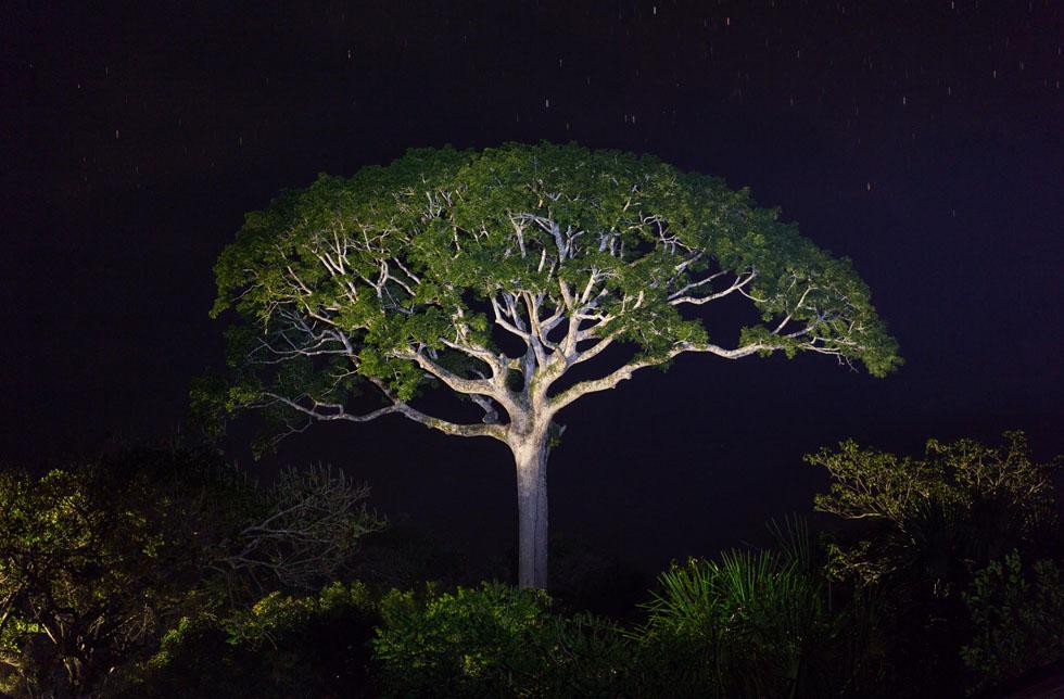 Naturschutzgebiet, Panguana Stiftung Regenwald
