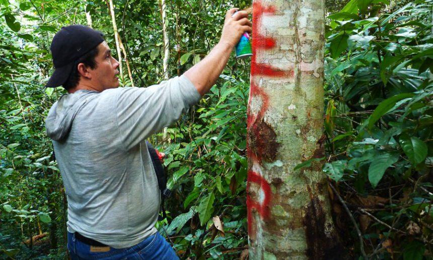 Hibraín Vásquez, hijo del administrador, marcando un punto limítrofe del área de Panguana
