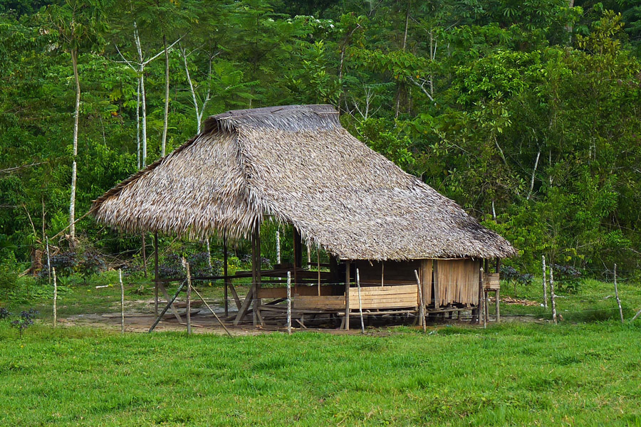 A traditional, half-open hut with a roof of palm fronds, downstream from Panguana