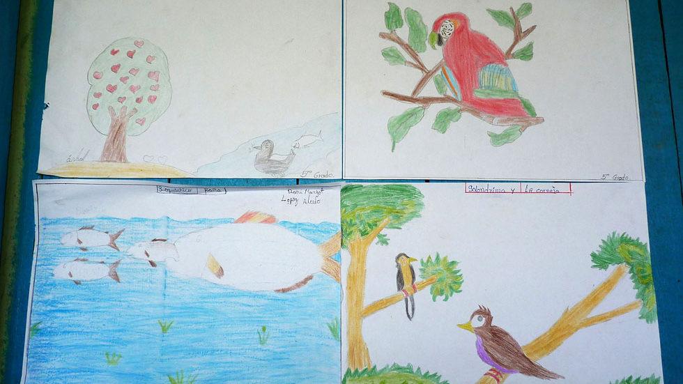 In den Zeichnungen haben die Schüler Tiere aus ihrer Natur festgehalten