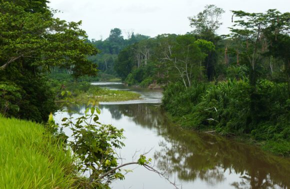 Usually an idyllic body of water: the Río Yuyapichis near Panguana