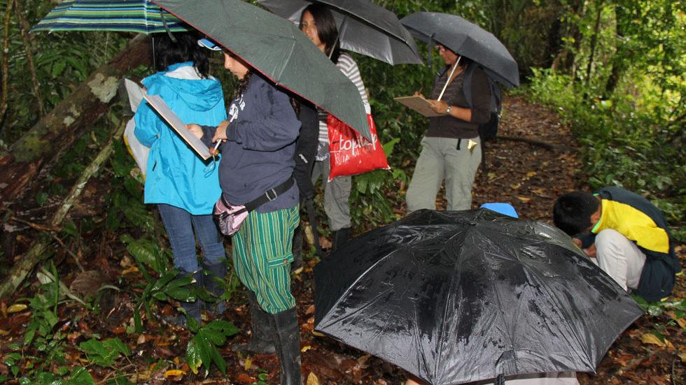 Pflanzen und Boden werden im regennassen Wald untersucht