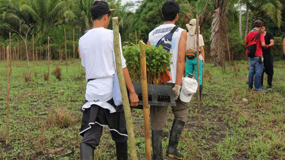 ... in einem abgesteckten Gelände junge einheimische Bäume aus einer Baumschule gepflanzt