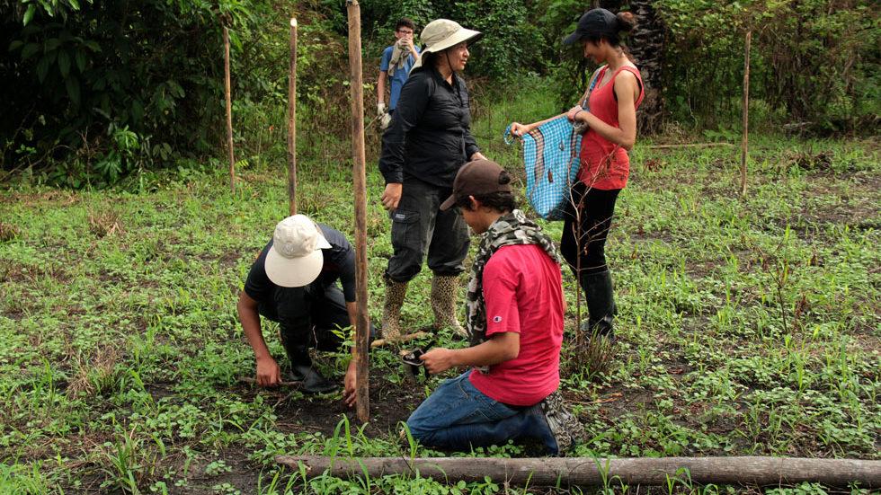 Transport und Einpflanzen der Setzlinge unter Anleitung der Lehrer