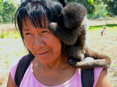 This young woolly monkey is very camera-shy and timidly huddles up to its surrogate mother